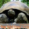 Tour Wild Giant Tortoise